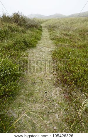 Amrum (germany) - Path Through Grass-covered Sand Dunes