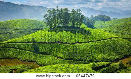 Panorama of green tea plantations in Munnar, Kerala, India