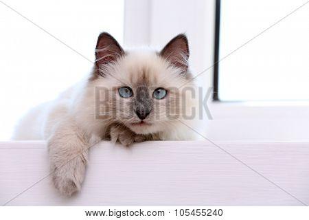 Kitten lying on windowsill, closeup poster