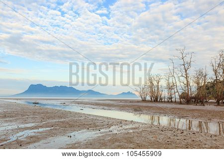 Dead trees in beach at low tide in bako national park sarawak borneo malaysia poster