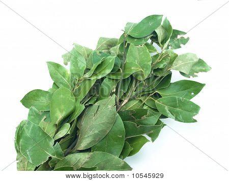Bay Leaf Bunch