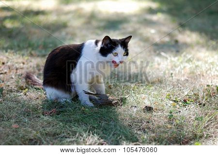 Black and white cat hunted a bird