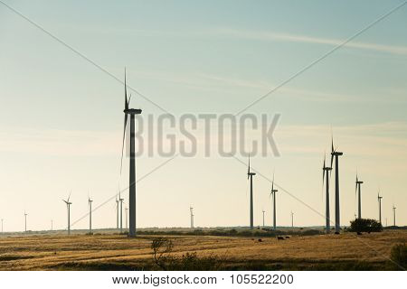 Silhouettes of windmills in a rural area against late afternoon sky