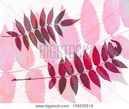 Abstract Watercolor Background And Rowan Leaves. Mixed Media