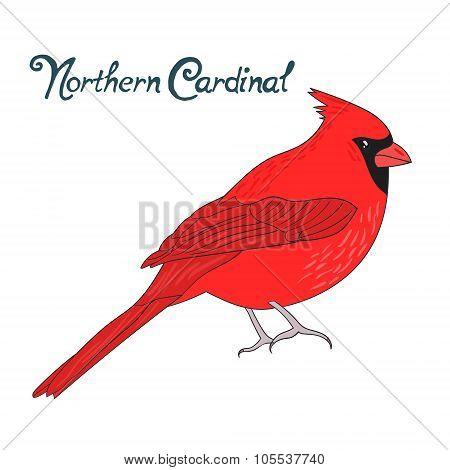 Bird northern cardinal vector illustration