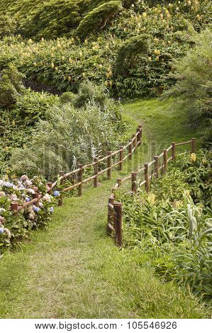 Green pathway sorrounded by lush vegetation in Flores Azores island. Portugal poster