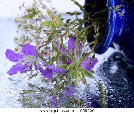 Lilac Field Flower