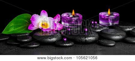 Beautiful Spa Concept Of Purple Orchid Dendrobium With Dew On Black Zen Stone, Green Leaf, Beads And