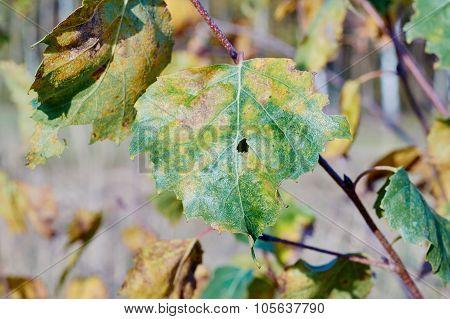 Close the leaf area in autumn