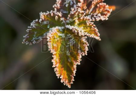 Leaves On A Winter Morning