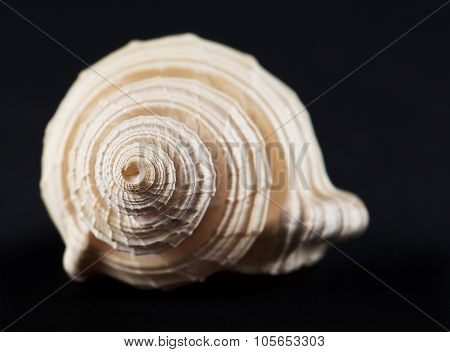 Sea shell isolated in black,Marine sea shell in a studio setting against a dark background. Sea shel