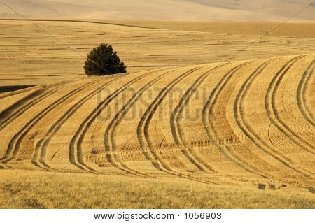 Wheat Field 9