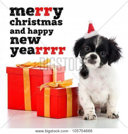 Santa Claus - dog