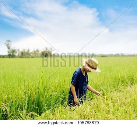 Boy observe rice field