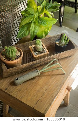 Little Green Plant Decorated On Wooden Table