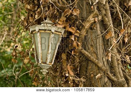 Old Lamp Hanging On Tree
