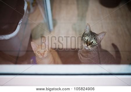Two Cats Waiting In Front Of The Terrace Door