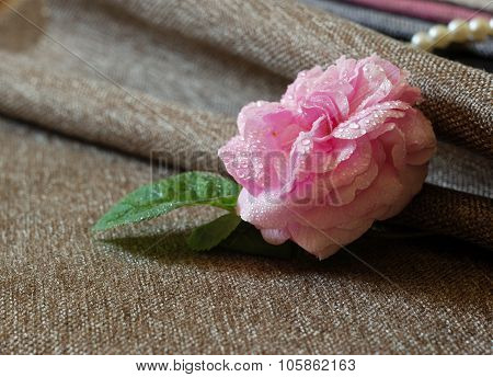 pink rose and sackcloth fabric