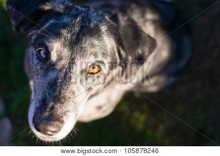 Bright Eyed Unique Looking Dog Canine Looks At Camera