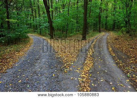 Landscape with fork rural roads in forest
