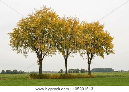 Three Trees With Yellow Leaves Against A Cloudy Sky