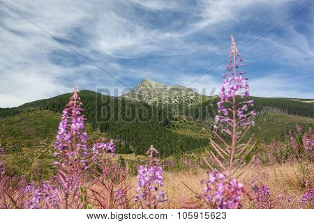 High Mountains - Krivan, High Tatra