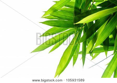 Green Bamboo Leaves With White Background