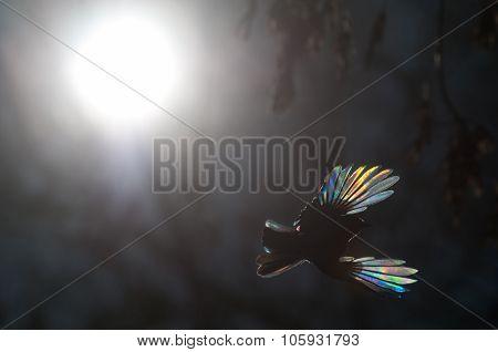 In Fantastic Firebird Forest