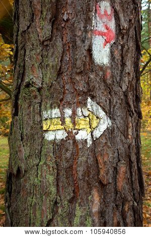 Poland, Marking Hiking Trail In The Woods, On A Pine Tree