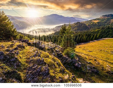 Valley With Conifer Forest Full Of Fog In Mountain At Sunset