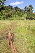 The famous Ondiri Swamp in Kikuyu near Nairobi in Kenya. The floating vegetation layer wobbles as you walk or jump on it. poster