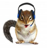 Funny animal call center operator chipmunk with phone headset on white poster