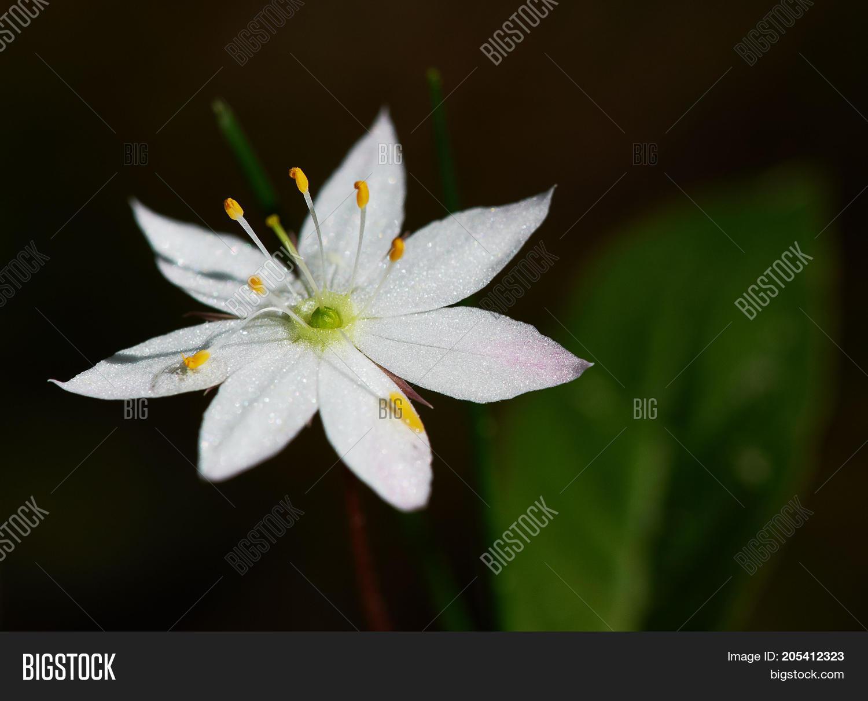 White Flower Seven Image Photo Free Trial Bigstock