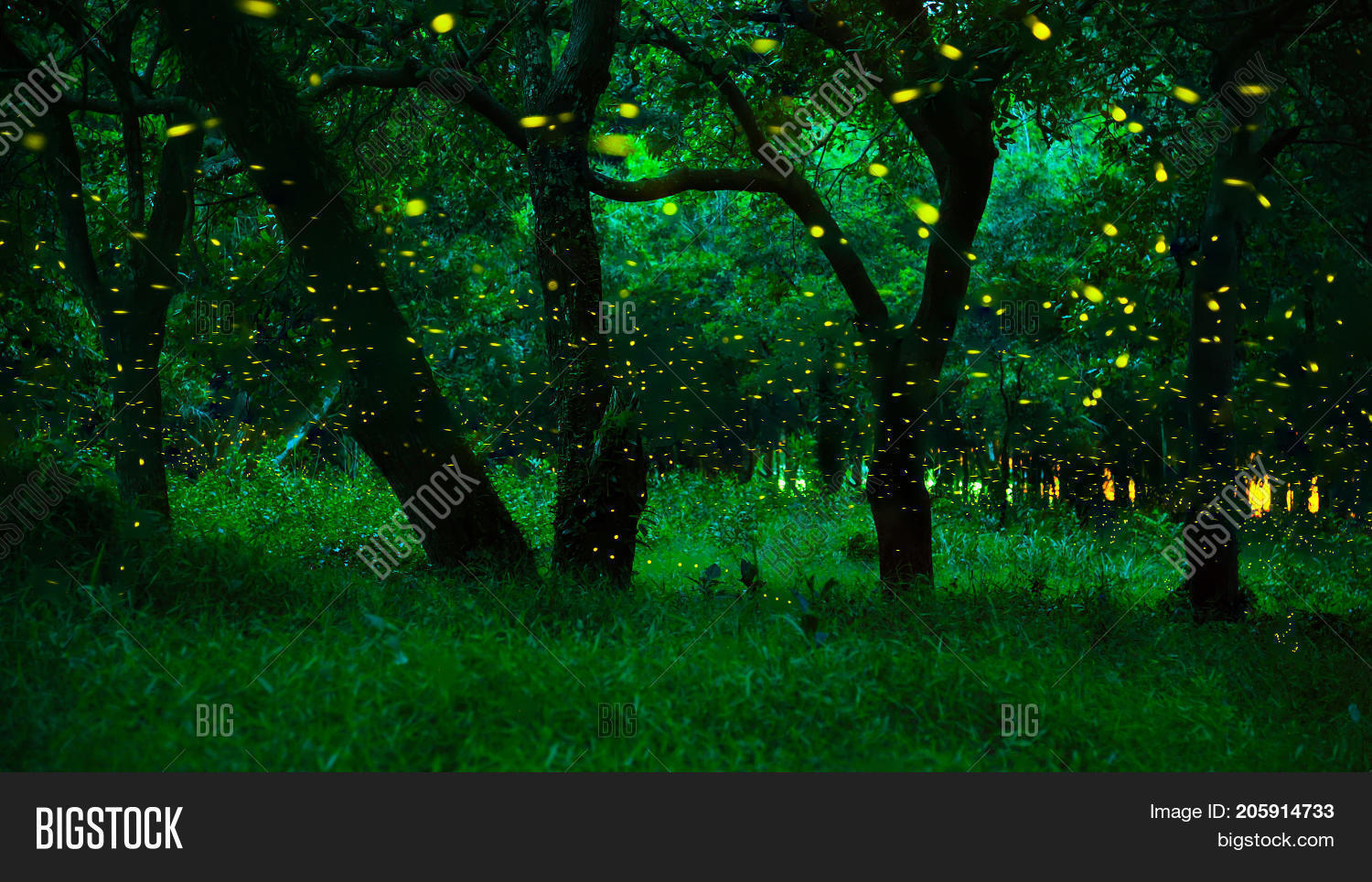 Firefly Flying Forest. Fireflies Image  for Firefly Insect At Night Wallpaper  70ref