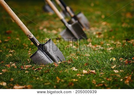 A close-up shovel is stuck in a green lawn with yellow leaves.