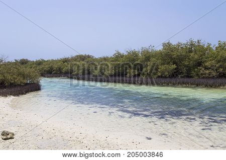 Mangrove vegetation in the Sinai Peninsula, tropical