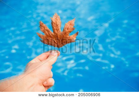 Hand of cleaner holds fall leaves on background swimming pool blue water. concept pool cleaning