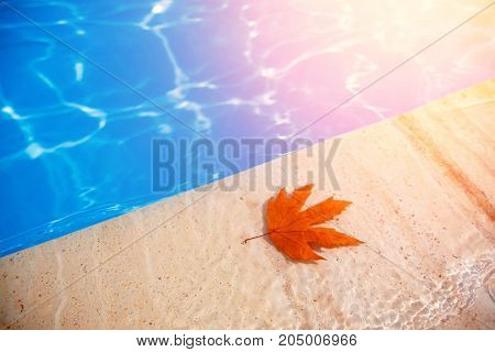 Fall leaves floating in swimming pool blue water sunset