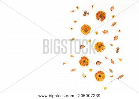 Autumn Flowers, Acorn, Flowers Petals On White Background. Flat Lay, Top View