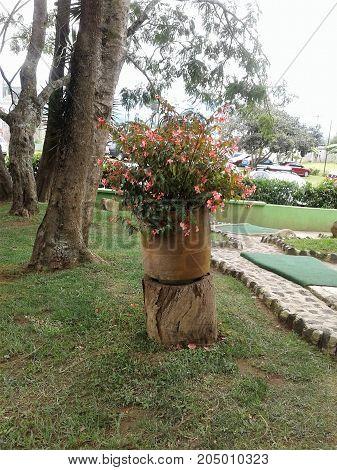 Maceta de flores sobre tronco en el jardin