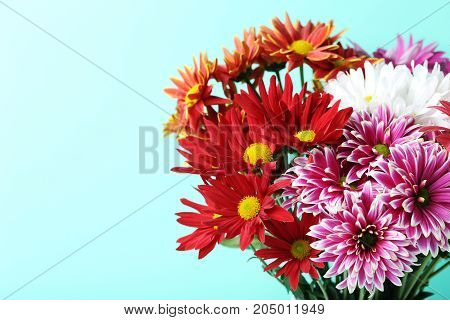 Bouquet chrysanthemum flowers on the mint background