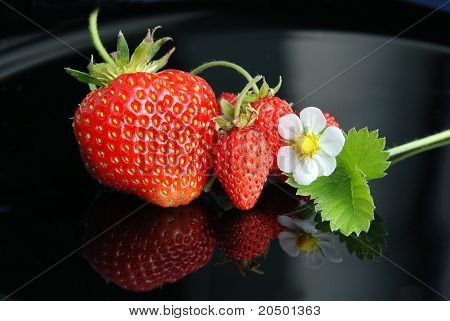 Fresh Strawberries, White Flowers On A Black Background
