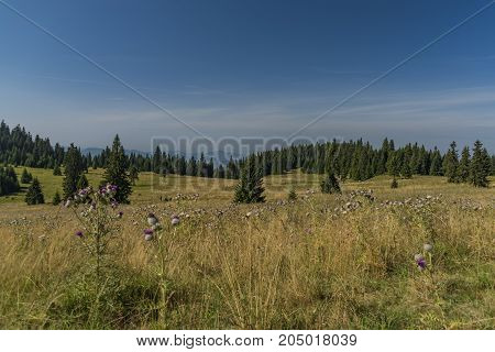 Meadow under Velky Choc hill in north Slovakia in summer sunny day