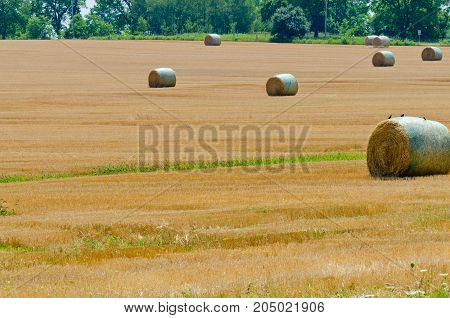The compressed band on wheat field in fall