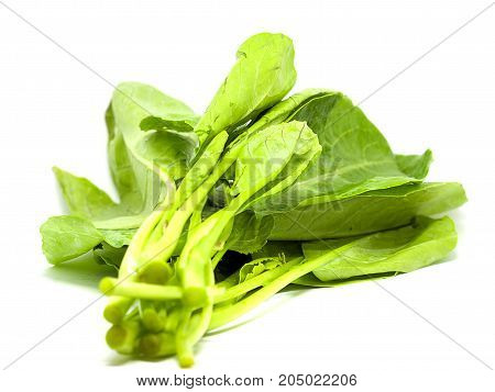 Chinese kale isolated on white background. (selective focus)