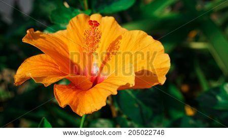 Orange flower in the garden with closeup shot