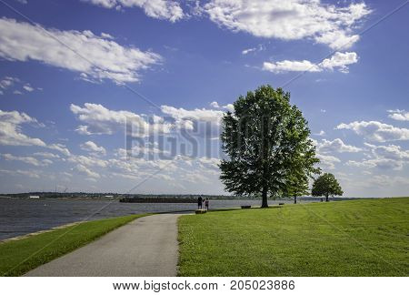 Big tree at Fort McHenry National Monument and Historic Shrine