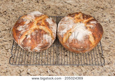 Two fresh baked loafs of round artisan sour dough bread on a kitchen counter top. poster