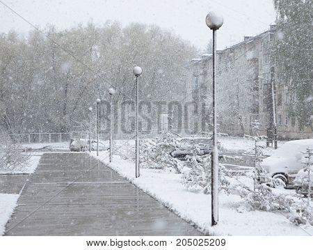 Snow falls on the asphalt and melts. Dank autumn day