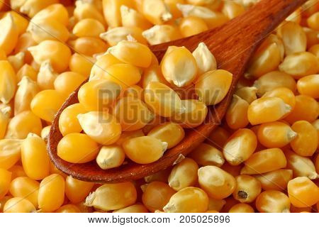 A close up of Corn kernels in apoon